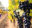 Grapes & Grains